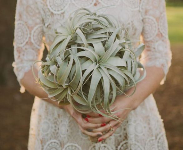 an air plant wedding bouquet is a unique take on a greenery one with no blooms