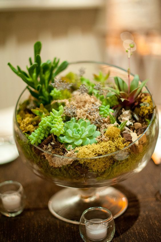 a bowl with moss and succulents for a cute look   terrariums are super trendy today