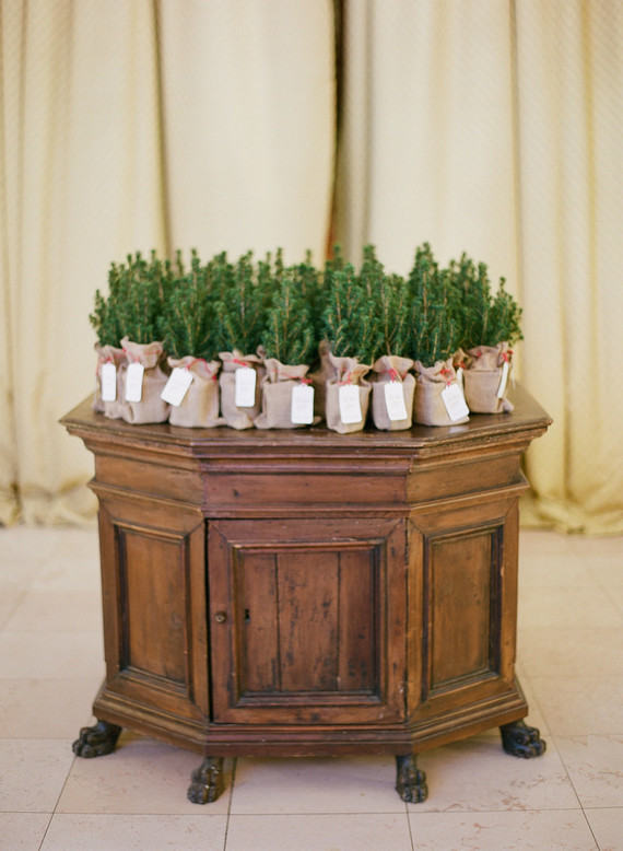 Evergreen trees in burlap were wedding favors