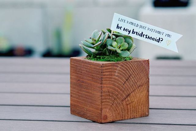 a cute succulent planted into a wooden box with moss is a creative way to ask the question