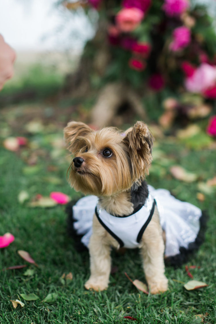 The couple's dog was dressed up in a tutu for a formal look