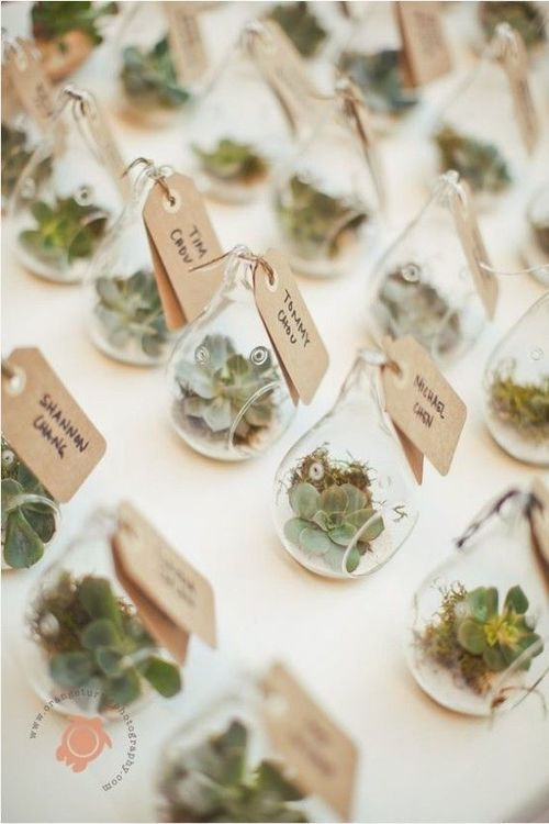 succulents in moss wedding favors in glass drop are used as favors and escort cards