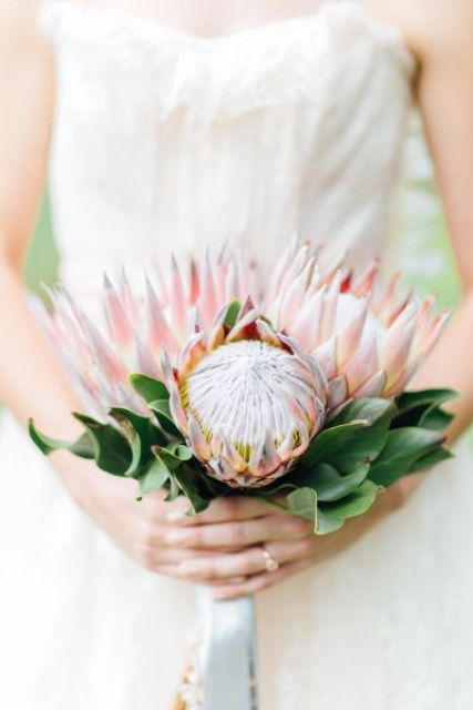 a wedding bouquet of three pink king proteas and some leaves for a classic look