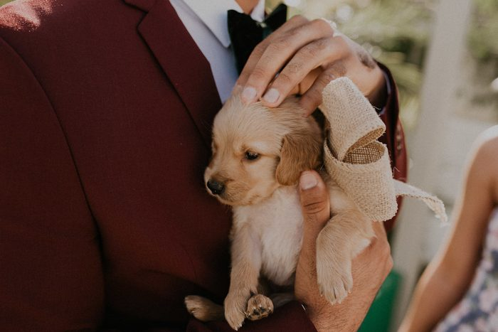 The bride gave the groom a pup as a gift and their new family pet