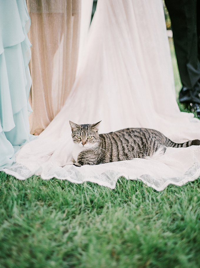The pet also took part in the wedding