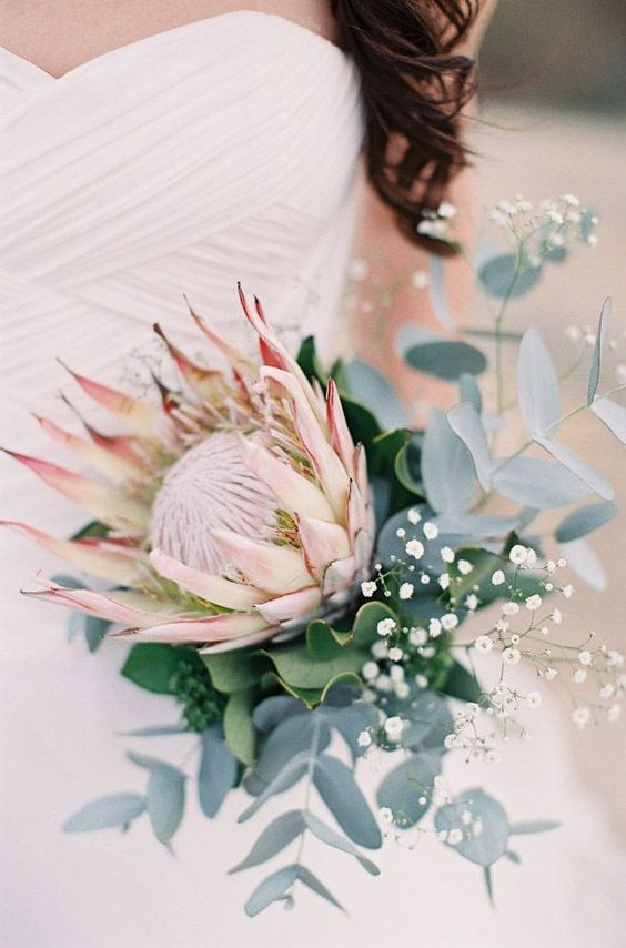 a simple bouquet with a king protea, baby's breath and eucalyptus for a stylish look