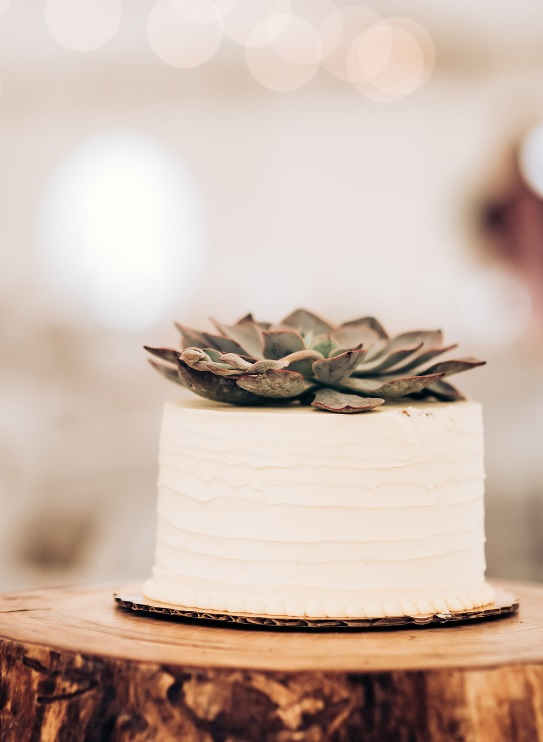The wedding cake was a white one with a succulent on top