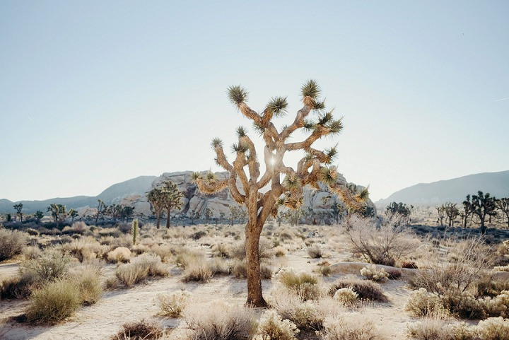 Joshua Tree is always a perfect place for a boho desert elopement, which is so popular now