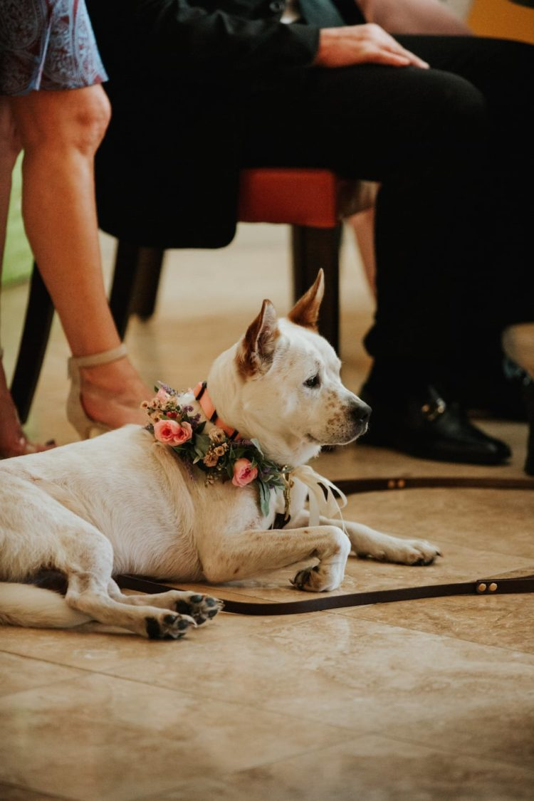 The dogs of the venue owners also took part in the wedding