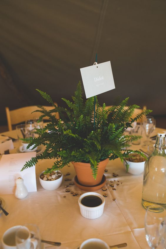 a potted fern with a name of the table is a cute and fresh wedding centerpiece