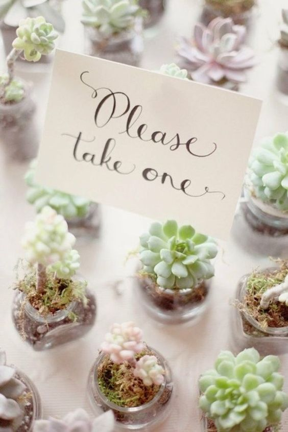 little potted succulents are an eco-friendly and trendy idea of wedding favors