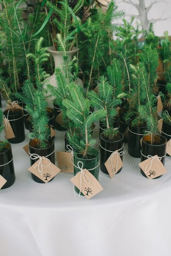 planted baby tree wedding favors with proper tags - plant some love