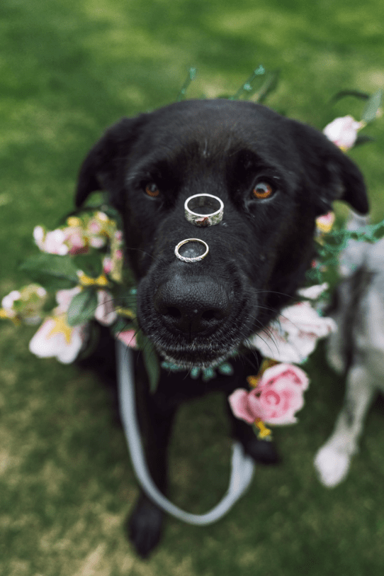 The couple's dogs took an active part in the wedding, too