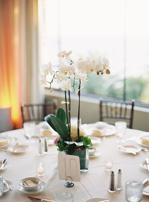 some blooming potted orchids will comprise a nice and chic wedding centerpiece