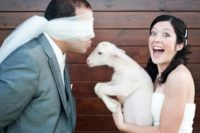 17 a blindfolded kiss at the wedding may be very surprising if you take a little pet instead of yourself