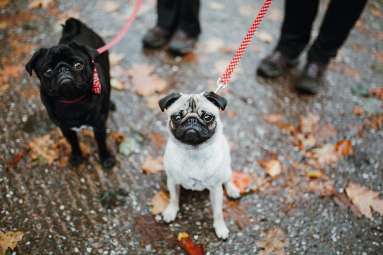 The couple's dogs took an active part in the wedding