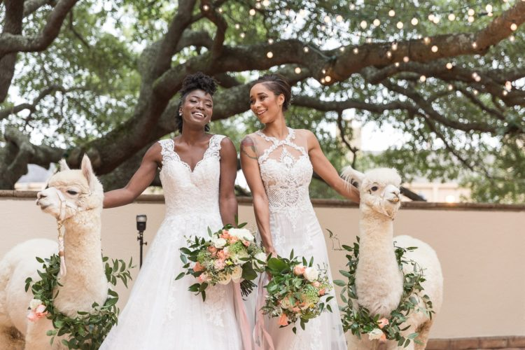 Look at these two amazing brides and two white alpacas with floral collars - aren't they gorgeous