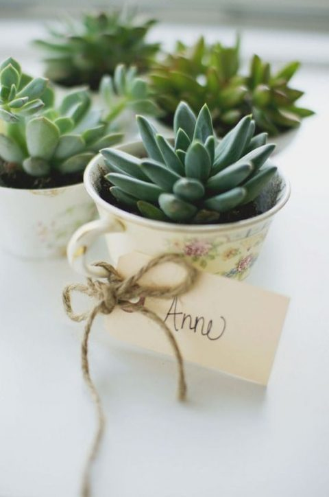 vintage teacups with succulents, cards and twine are new classics – a fresh idea of a wedding favor