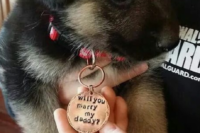 09 pop the question with your little pet, such a proposal can't be rejected, it's too cute
