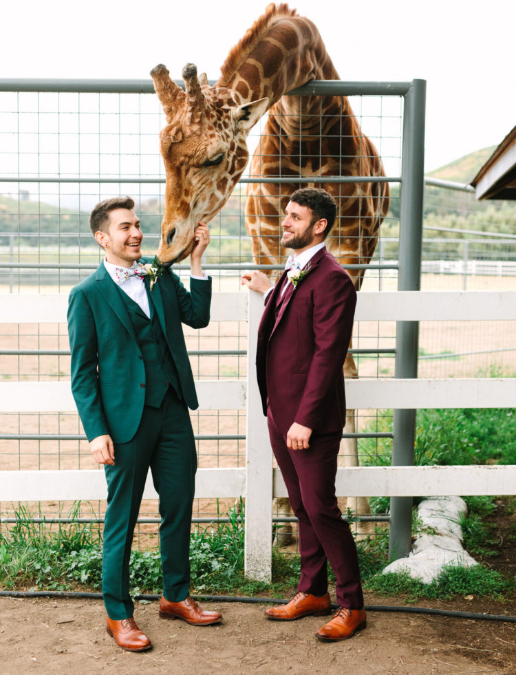 A giraffe was a guest at the wedding, and everyone could feed him with special treats