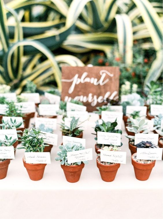 mini succulents in pots are a nice sustainable wedding favor idea for your wedding