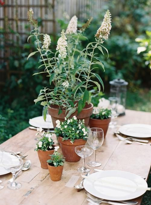 create a simple wedding centerpiece of potted flowers that can be used afterwards, too