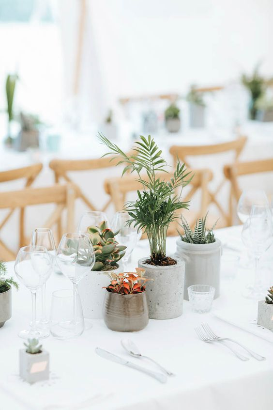potted plants and succulents make up a simple and cool wedding centerpiece, which is sustainable