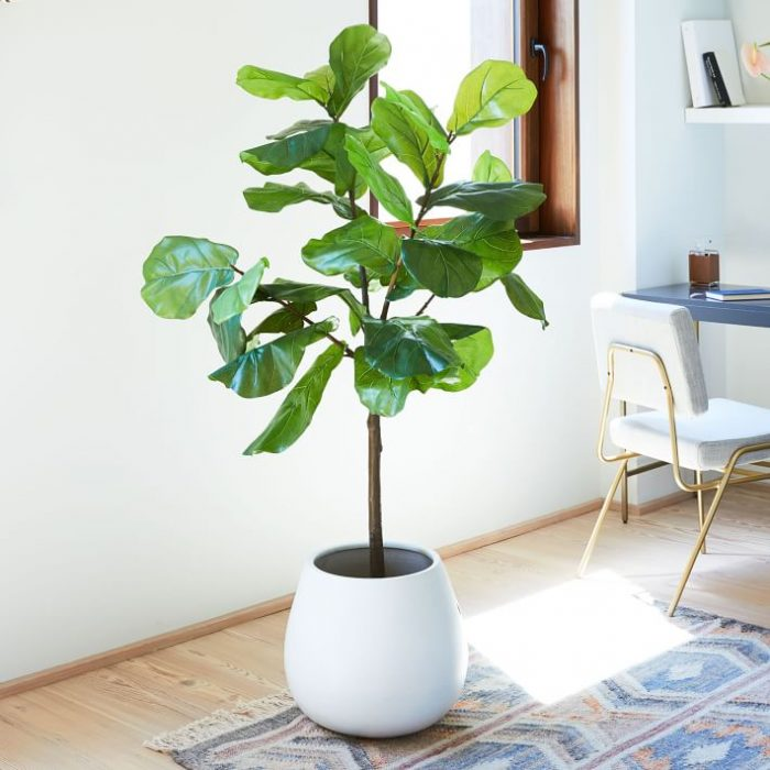 a faux fiddle leaf fig plant like this one will add an outdoorsy feel to your pics for sure