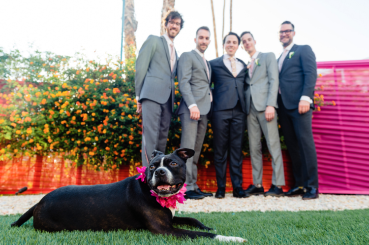 The groomsmen were wearign grey suits and the couple's pup took part in the wedding, too