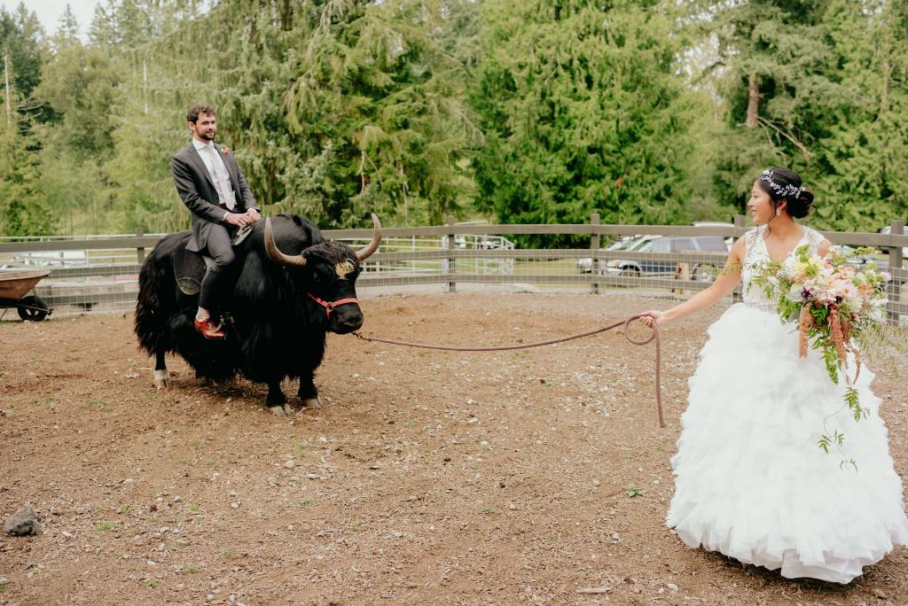The couple were riding yaks that are symbolic for Chinese culture