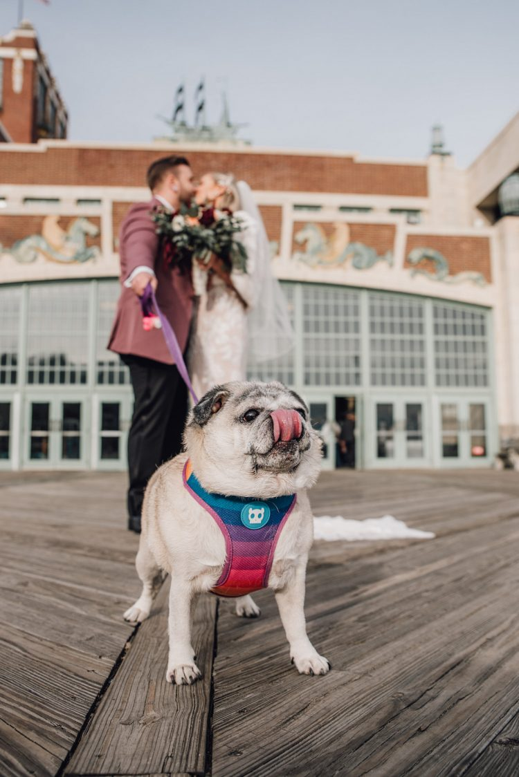 The couple's dog took part in the wedding, he was dressed in a funny colorful piece