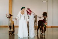07 Alpacas participated in the wedding as symbols of happiness