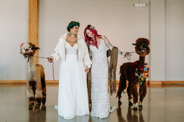 Alpacas participated in the wedding as symbols of happiness