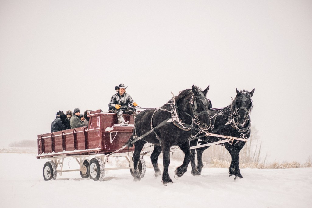 Telluride Horses transported guests via horse-drawn carriage and we love it