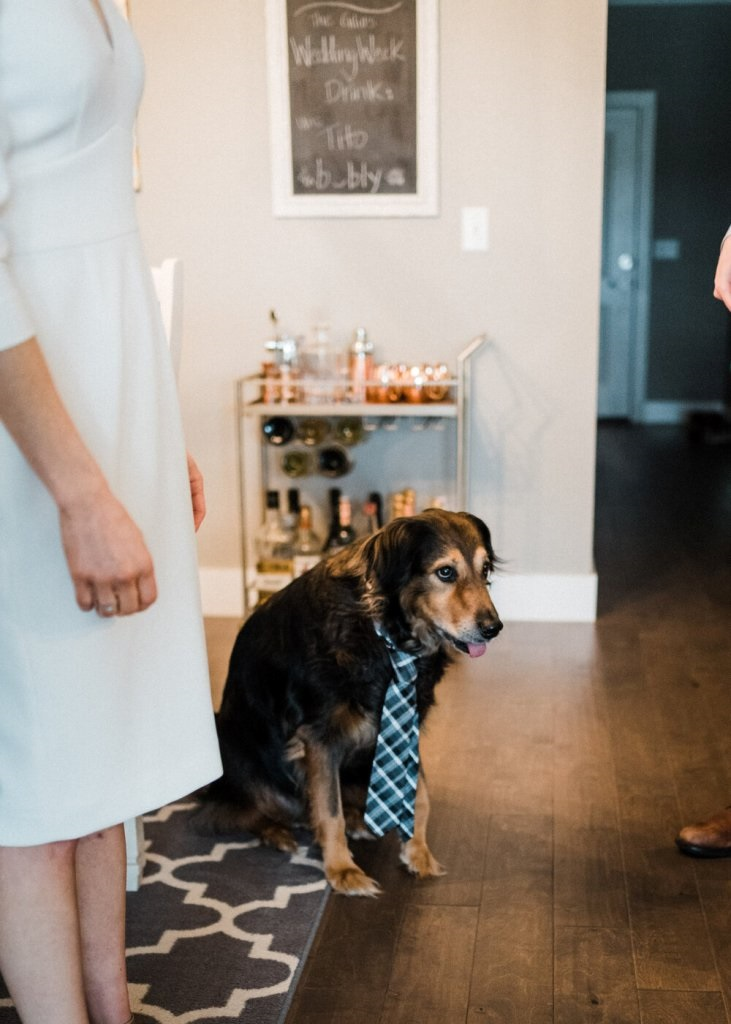 you can easily include your pets into your at home wedding as they don't have to be transported anywhere