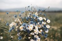 06 a simple summer wedding bouquet of daisies, blue thistles is a lovely idea to rock and it's very easy and fast to compose