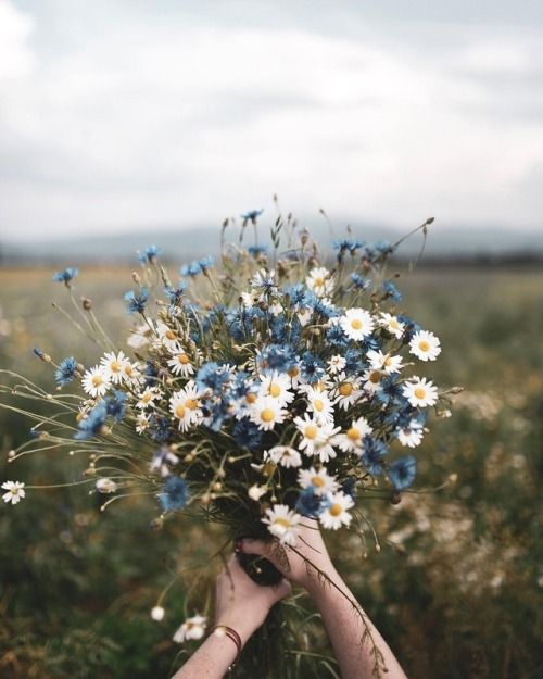 a simple summer wedding bouquet of daisies, blue thistles is a lovely idea to rock and it's very easy and fast to compose