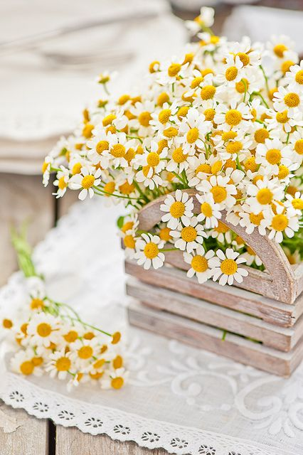 a crate box with daisies is a lovely and cool rustic wedding idea to rock - such a centerpiece is very bright and inspring