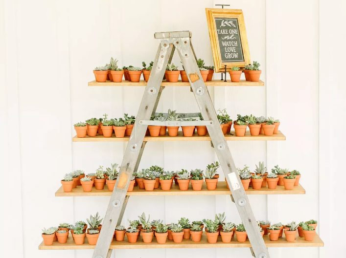 potted plants are perfect eco-friendly and zero waste wedding favors are lovely for everyone and will remind of your wedding