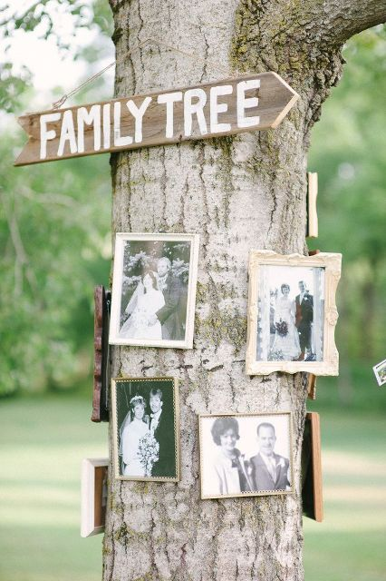 a real tree with black and white family pics on it is a simple and natural idea for an outdoor wedding