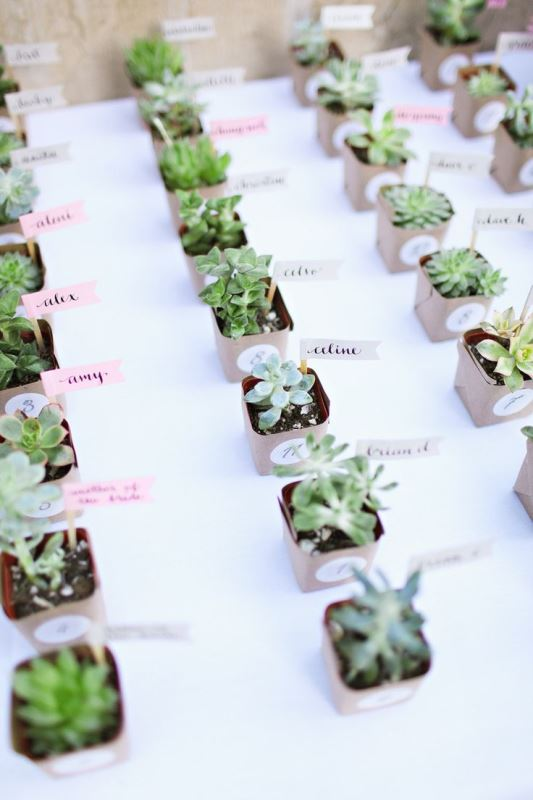 wedding favors   succulents in tiny pots with marks are a trendy and budget friendly idea for a wedding