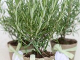 potted herbs are great for a rustic, Italian or just Mediterranean wedding