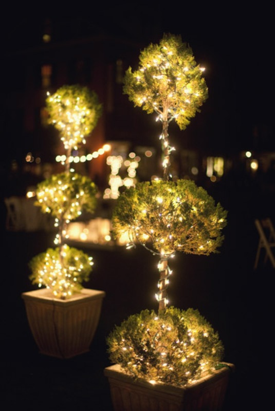 lit up mini trees in planters look very chic and very stylish and add interest to the space