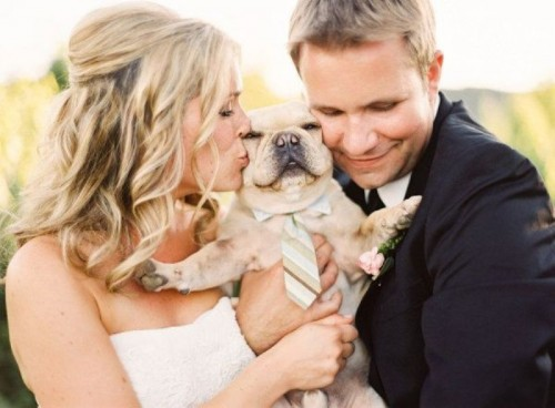 32 Cutest Ways To Get Your Furry Friends Wedding Ready
