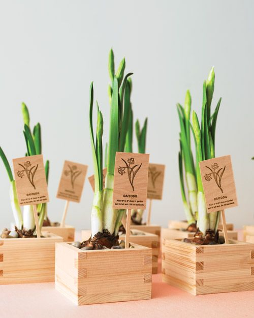 mini bulbs planted into wooden boxes and with wooden marks are cool for spring weddings