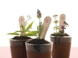 mini pots with spring herbs and markers are amazing for spring farmhouse weddings