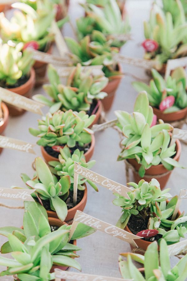 mini succulents in pots plus markers are amazing for any wedding season