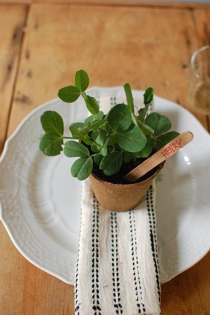fresh herbs planted in a pot and marked will bring life to the table and feed the guests after the wedding