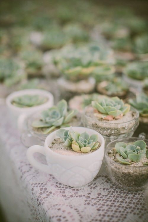 succulents planted into an assortment of tea and coffee cups are stylish and simple wedding favors for any season