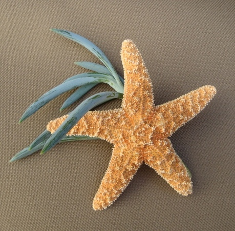 starfish and sea grass boutonniere